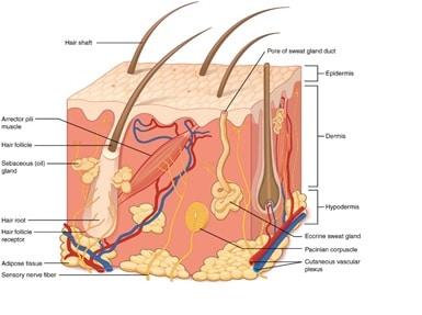 stretch marks on skin